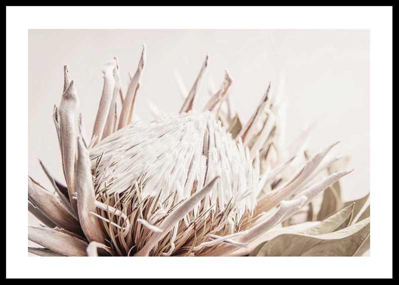 Protea Flower No1-0