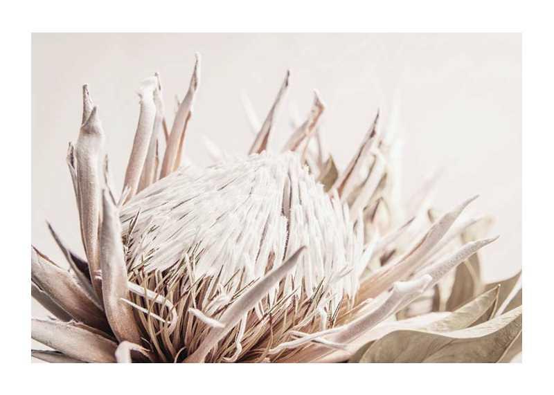 Protea Flower No1-1