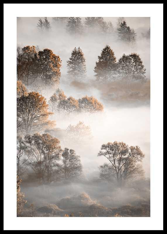 Autumn Forest-0